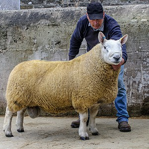 Caithness Sale Report 2020